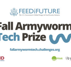 fall-army-worm